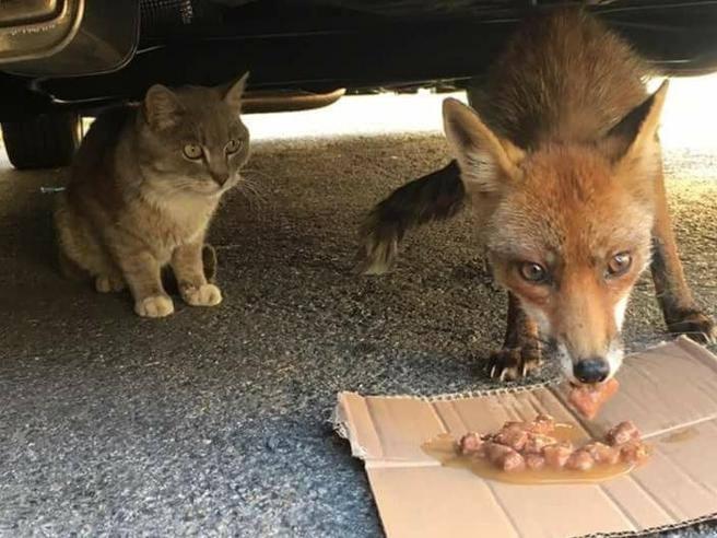 Dal gatto e la volpe al cane allo specchio gli animali che divertono il web - Cane allo specchio ...