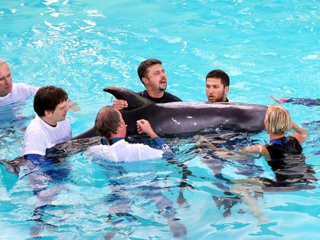 Via libera al bagno con i delfini gli animalisti insorgono - Bagno coi delfini roma ...
