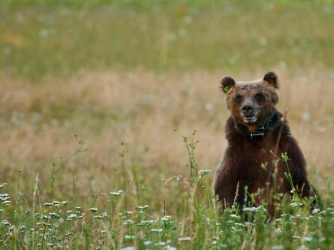 Il bosco rinasce da api e orsi: i metodi naturali per ricrearlo dopo gli incendi