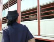 Controlli della polizia stradale nel video della Lav