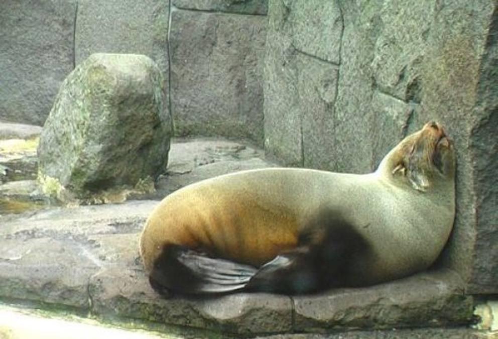 Risultati immagini per animali dormono