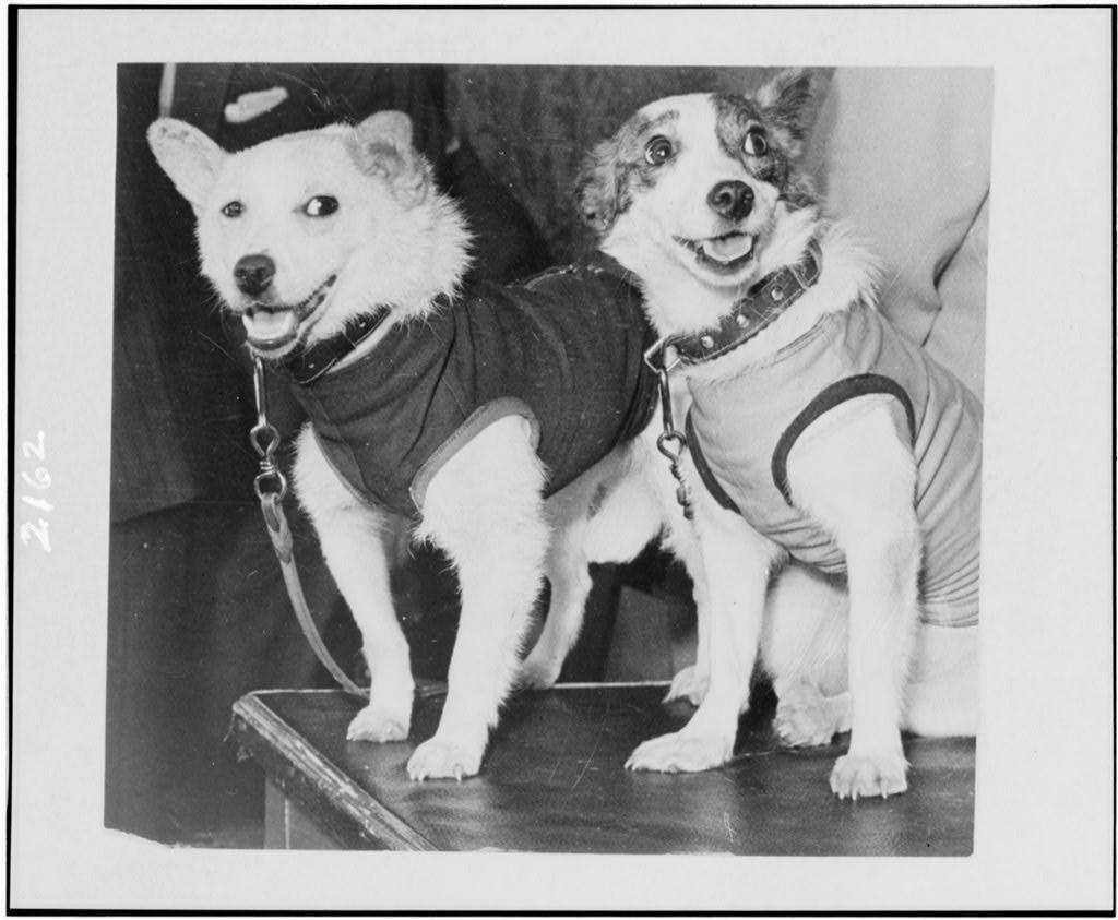 La Cagnolina Laika E Tutti Gli Altri Animali Mandati Nello Spazio