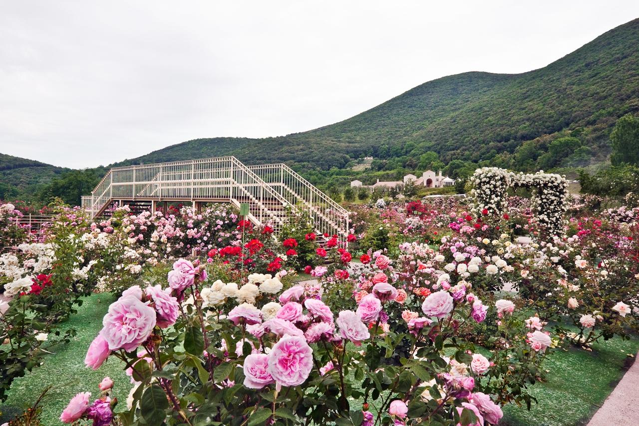 In nome della rosa» 33 roseti italiani da sogno corriere.it