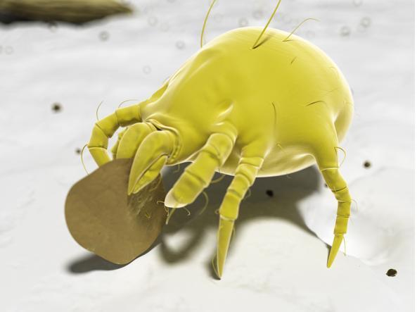 Come difendersi dagli acari della polvere: i consigli per tenerli