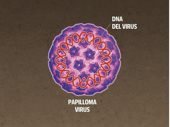 Papilloma: tutto quello che servesapere sul virus HPV e sul vaccino