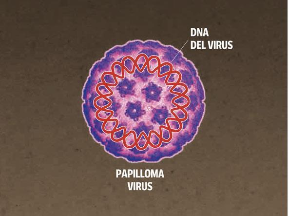 Virus hpv che cos e