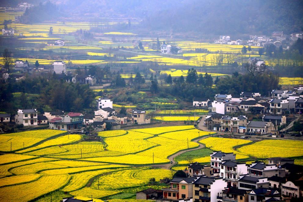 xinhua china anhui laian pond cypress scenery scenery - 900×600