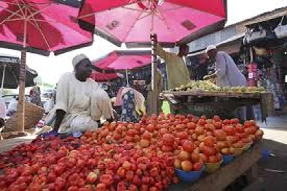 In rete la battaglia del pomodoro: il sogno nigeriano il bagno
