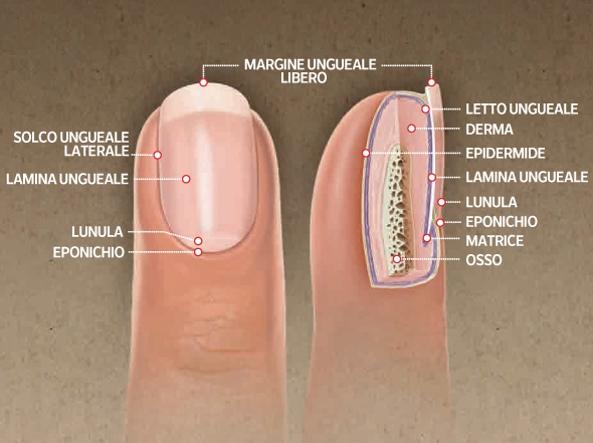 Fungo o micosi alle unghie: cos'è, sintomi e trattamento