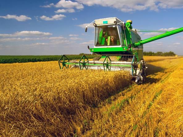 Produrre grano non conviene più Previsto un calo del 10,9% in Italia ...