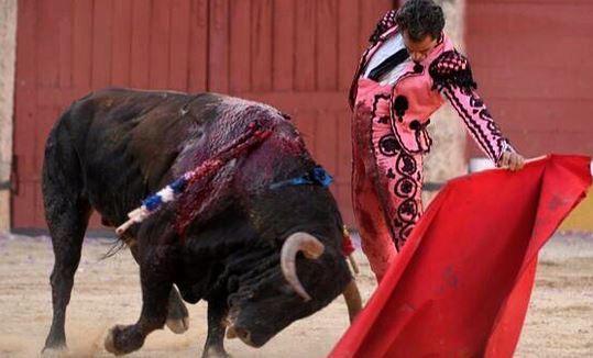 Torero ucciso dal toro, le immagini dell'incornata fatale - Corriere.it