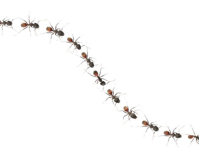 I robot che sembrano formiche for Formiche volanti in casa