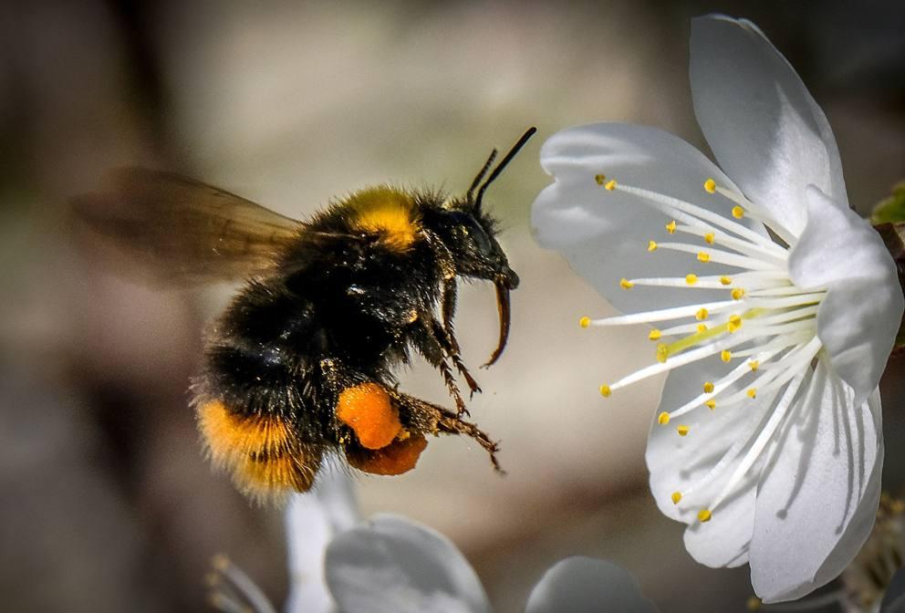Anche le formiche nel loro piccolo si abbeverano - Bumble bee pictures a colori ...