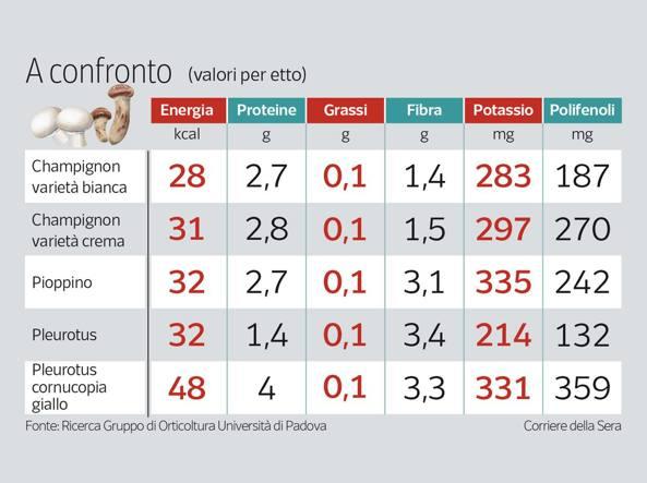Calendario Funghi.Funghi Buona Fonte Di Vitamine E Polifenoli Ma Un Po