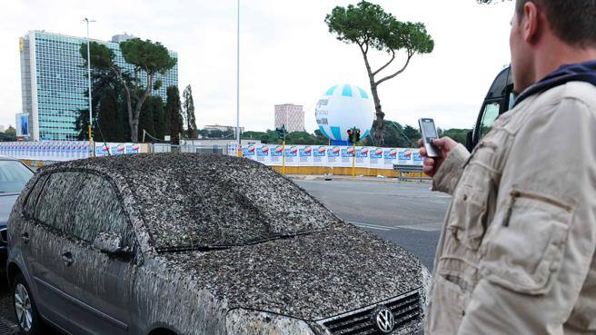Aculei anti-uccelli sugli alberi Ecologisti contro automobilisti