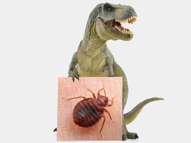 Le cimici dei letti ai tempi dei dinosauri: oggi come allora pungono e sono infestanti
