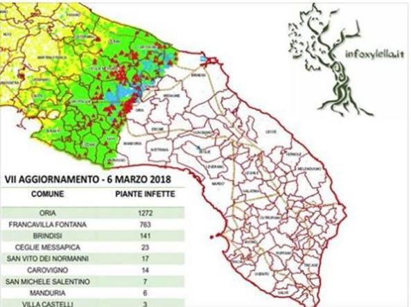 Mappa Xylella Puglia.Xylella Triplicati I Casi In Puglia Ma Il Tar Blocca Ancora Il Taglio Di 50 Ulivi Corriere It