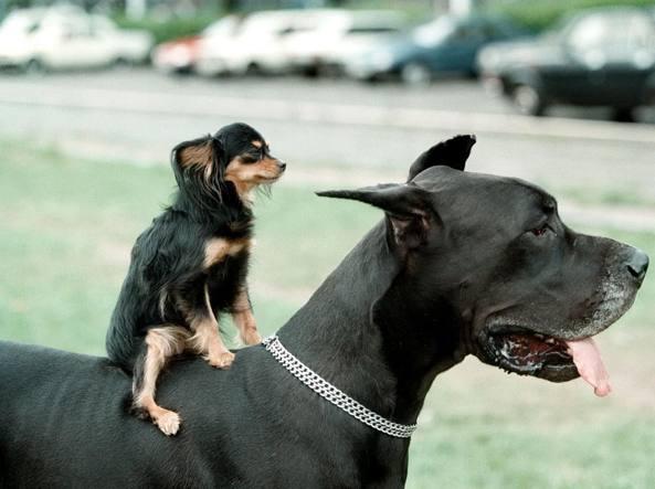 Volevo un cane piccolo ma storie di adozioni non riuscite