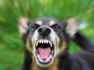 Canada, bambino problematico «curato» con saliva di cane rabbioso