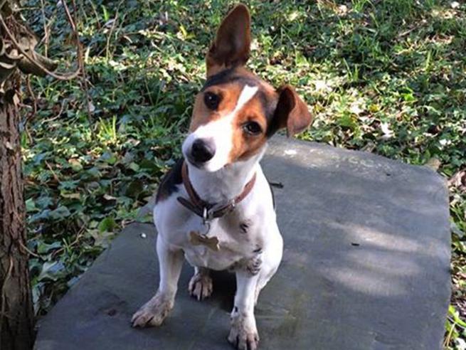 Twiglet, la cagnolina arruolata per rilassare gli studenti è stata messa a risposo per «troppo stress»