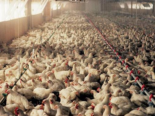 Spadafora o Vago alla guerra delle classi pollaio? Il totoministro dell'Istruzione