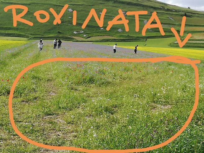 Norcia, l'appello dei terremotati: «Non calpestate la fioritura delle lenticchie per un  selfie» Video