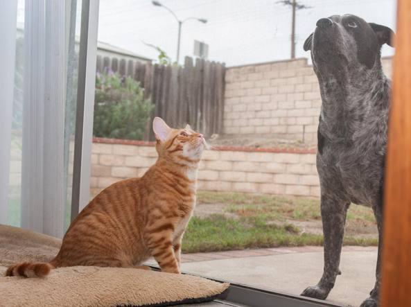 Il Cane E Il Gatto Due Stili A Confronto Ecco Cosa Ce Li Fa Amare