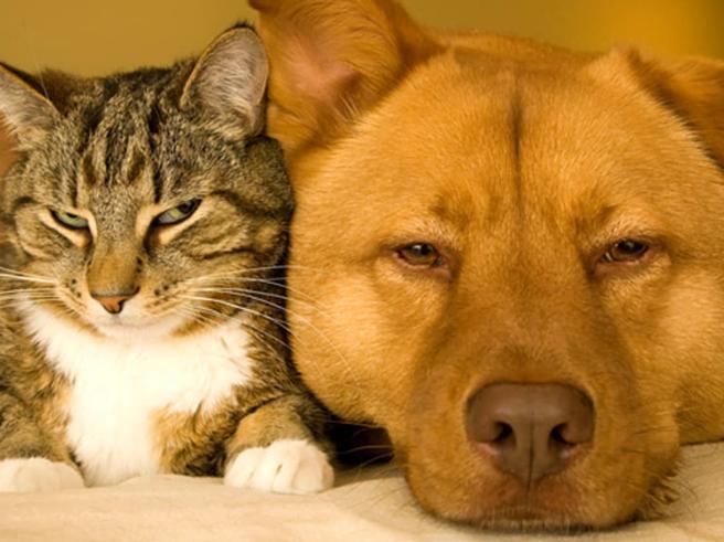 Il cane e il gatto due stili a confronto: ecco cosa ce li fa amare in modo diverso