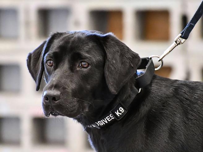 Il business e l'egoismo del dog sharing: ma voi dareste vostro figlio in condivisione?