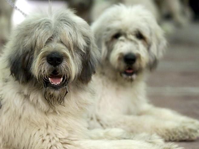 Quello che i cani ci dicono (e noi non capiamo)|Gesti e significati