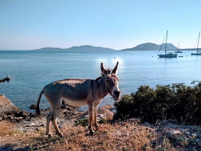 Il solstizio d'estate dall'isola dell'Asinara