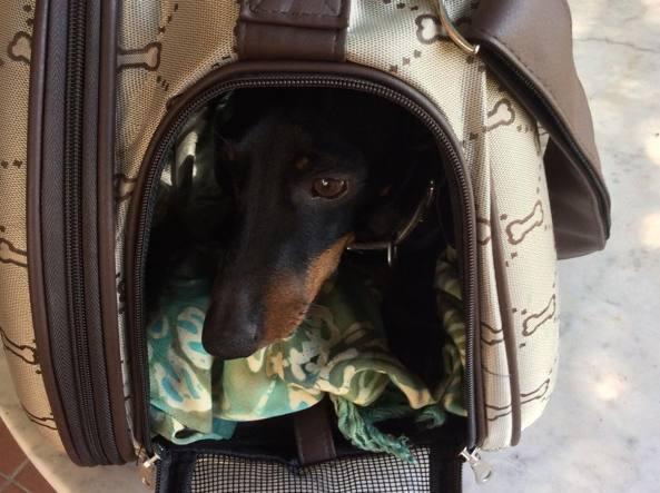 Cani Gatti C In Valigia Come Viaggiare Con Loro Senza Problemi