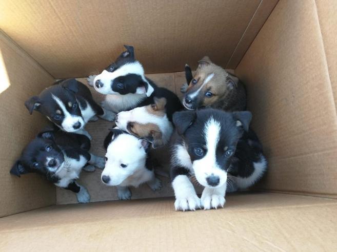 Cuccioli abbandonati in uno scatolone, adottati in 48 ore grazie alla rete
