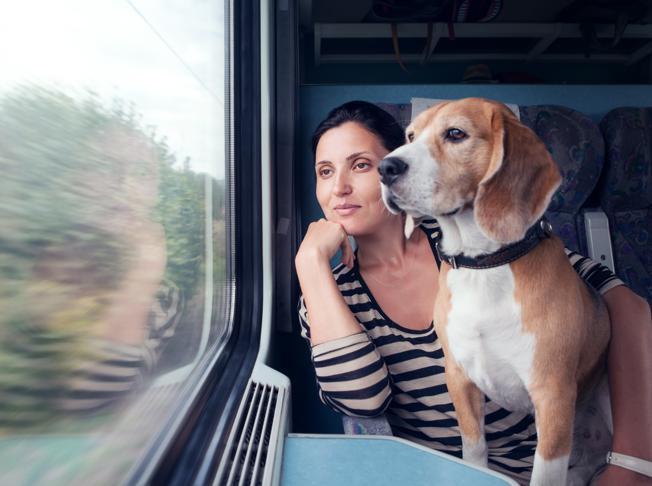 Vacanze in treno, il cane viaggia gratis: l'iniziativa anti-abbandono