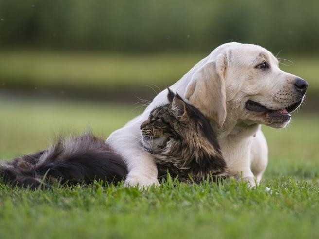 Cani e gatti, sterilizzarli o no?Cosa cambia nell'alimentazione
