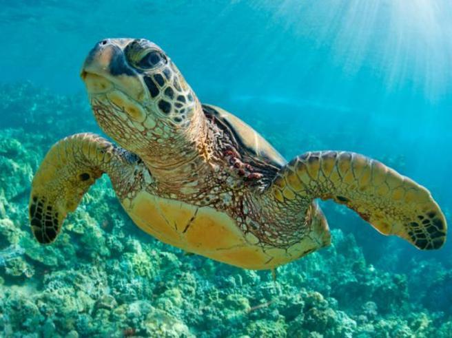 Tartarughe e spiagge, le app per aiutare a difendere l'ambiente
