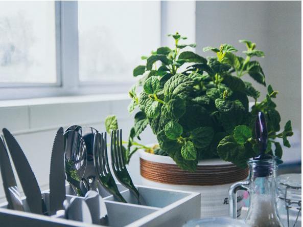 Sala Da Bagno Pianta : Le piante più adatte a ogni stanza depurano l ambiente o