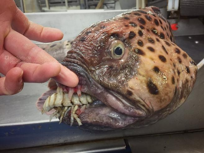 Il calamaro gigante e gli altri «mostri» marini (e non solo): animali che mettono paura