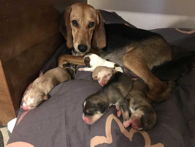 Storia di Sola, e dei suoi sette cuccioli