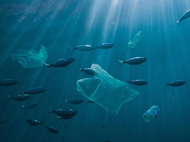 Plastica, la Nuova Zelanda vieta i sacchetti: «Salviamo i mari»