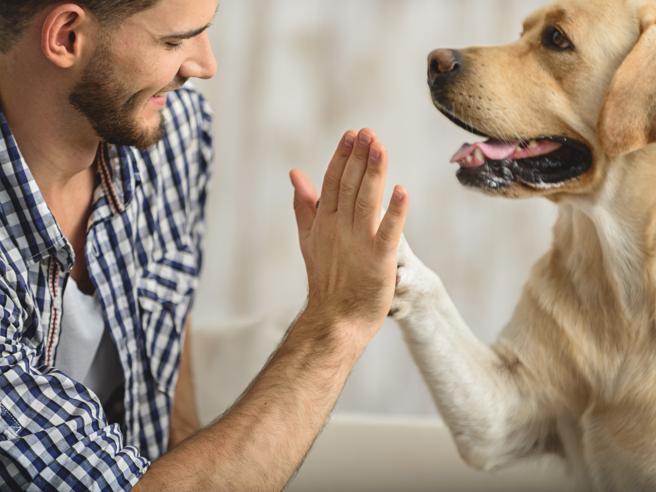 Risonanza magnetica, le barbe lasciano più batteri dei cani
