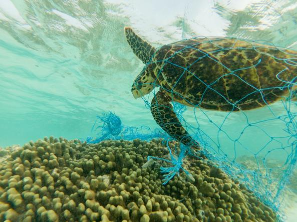 Quanta plastica serve per uccidere le tartarughe marine for Vasche di plastica per tartarughe