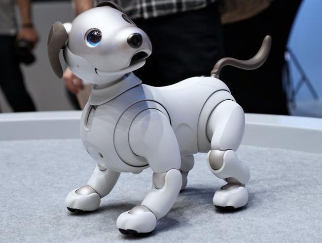 Può un robot sostituire l'amore di un cane?