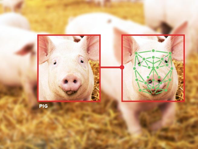 Non solo visi umani: quando (e perché) il riconoscimento facciale è usato sugli<a href=