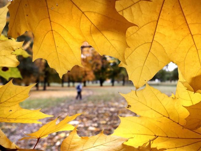Lo show dei colori dell?autunno: dalla Finlandia alla GermaniaLe foto più belle da tutta Europa