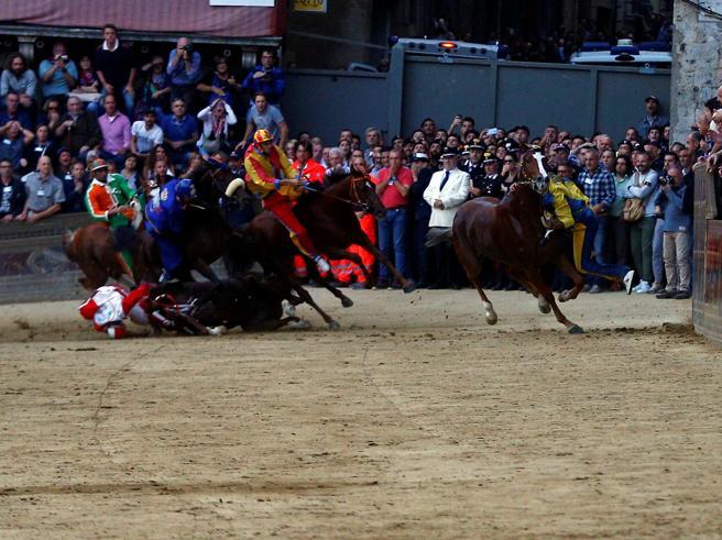 Palio di Siena: abbattuto Raol, il cavallo della Giraffa rim