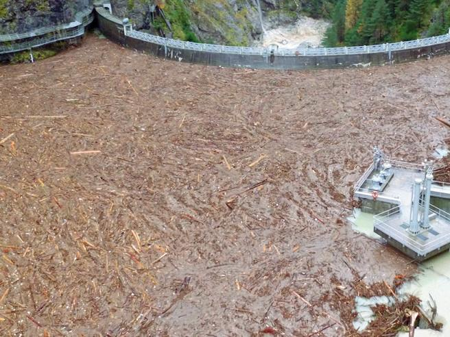 Il peccato originale degli abeti rossi: radici troppo fragili Perché sono caduti|foto|videoI danni: 5 mila famiglie al buio
