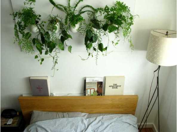 Vuoi dormire meglio? Metti una pianta in camera da letto - Corriere.it