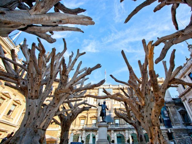 Gli scarafaggi distruggono le querce: vengono da una scultura di Ai Weiwei