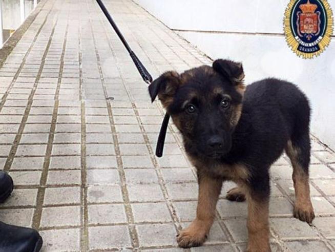 Il sondaggio online per il  nome del cucciolo della polizia di Granada